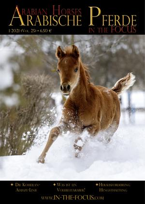 Arabische Pferde IN THE FOCUS 1/2021 (Vol. 25)